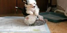 Впитывающие пленки для щенков