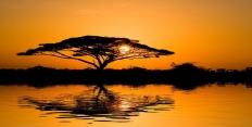 Формирование фауны Африки