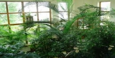 субтропический зимний сад